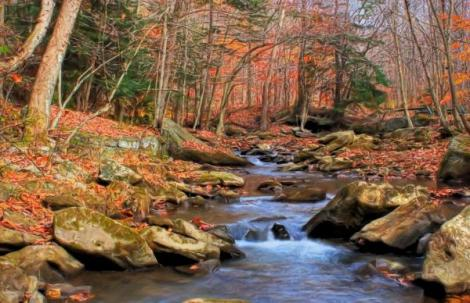 roaring-run-stream-late-fall-randy-steele